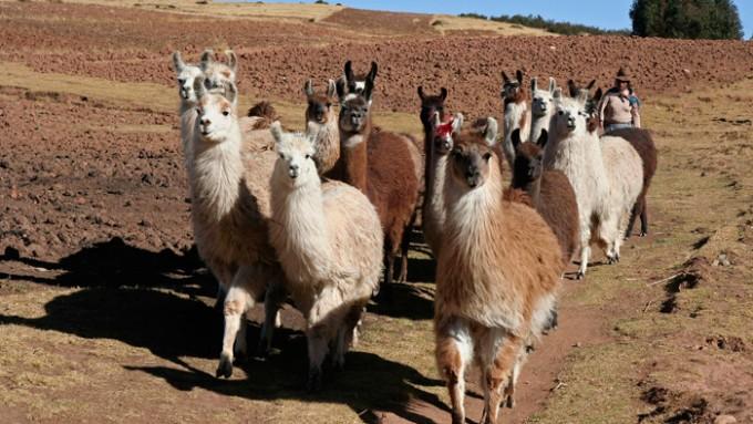 Viajes a Perú en grupo